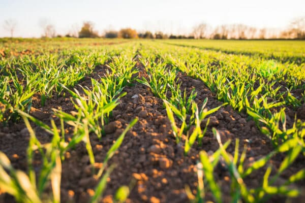 Learn How IoT Can Be Used In Agriculture